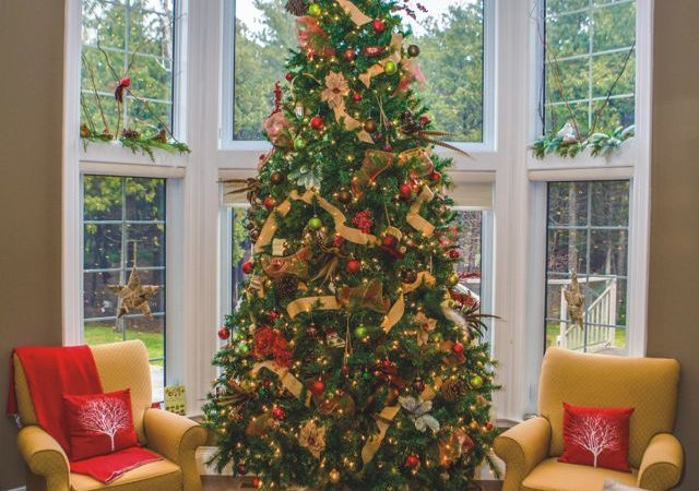 Keep your Christmas tree safe and healthy