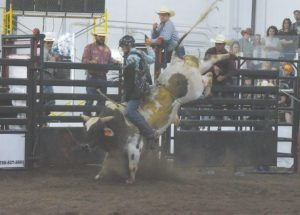 PIC – Ride 'em cowboy!!