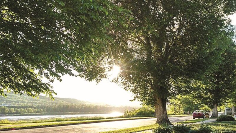 Residents make last minute plea to save 99 St trees